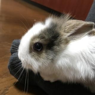 可愛い赤ちゃんウサギ