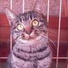 顔立ちの綺麗な子猫3匹 ♂2匹 ♀1匹