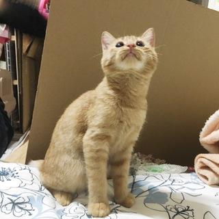 両眼失明と言われた仔猫、見えるようになりました!