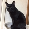 穏やかな黒猫女の子