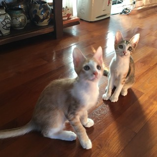 3ヶ月の子猫2匹