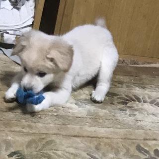 フサフサ子犬♪