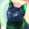 甘えん坊黒猫4ヶ月♡ぬいぐるみ猫るり初心者向け