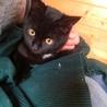 生後3ヶ月ゴロスリ黒子猫