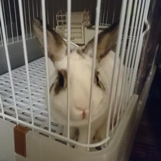 ミニウサギ?