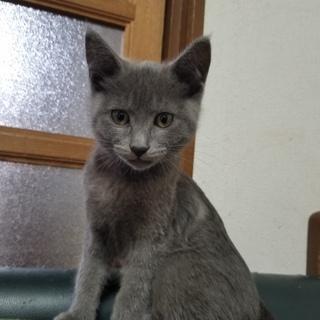 親猫、子猫含む、里親さんを募集しています!