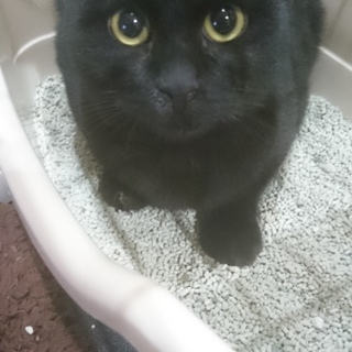 黒猫ちゃんの里親様募集です。