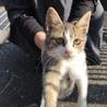 寒空に親子で捨てられお母さん猫と頑張ってきた仔猫