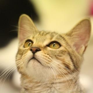 めちゃめちゃ甘えたさんの美猫さん
