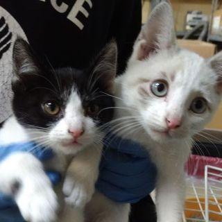 寒空の中、保護した、とっても元気でかわいい兄弟子猫