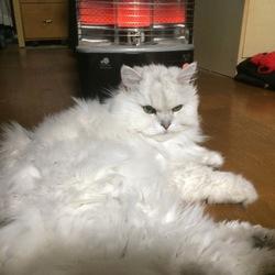 今朝は冷えました。。