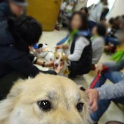 「犬の合宿所in高槻」の里親募集会 サムネイル2