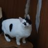 丸顔和猫・ふくふく サムネイル6