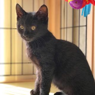 可愛い黒猫☆くーちゃん 3ヵ月
