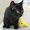 可愛い黒猫☆くーちゃん 3ヵ月 サムネイル2
