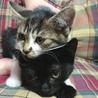 可愛い黒猫☆くーちゃん 3ヵ月 サムネイル3