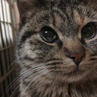 とても可愛いタレ目な猫ちゃん
