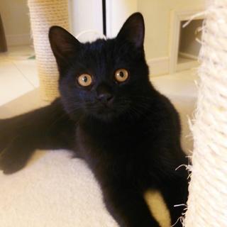 おっとりした黒猫のジジ君