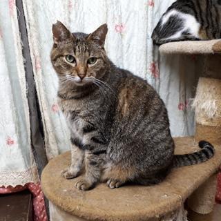 一匹飼いか猫エイズの先住猫のいるお家希望・シント