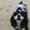 犬のボランティアmilim...(保護活動者)