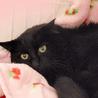おだやか黒猫☆美音(みおん)ちゃん 2歳 サムネイル2