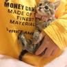 とっても可愛い生後約40日の子猫ちゃんです! サムネイル3