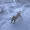 初めての雪に、最初はビビリ気味でしたが、すぐに慣れてはしゃいでました。