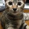 キジ猫3姉妹 サムネイル2