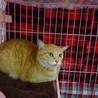 なかなか心開かない猫です サムネイル2