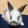 10/28生まれの子ウサギ サムネイル2