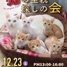 4ヶ月ブラックスモーク★スリゴロ美猫レタス♀ サムネイル5