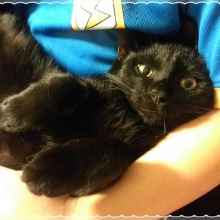 ポンポン尻尾の黒猫くん