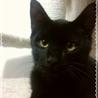 ポンポン尻尾の黒猫くん サムネイル2
