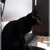 ポンポン尻尾の黒猫くん サムネイル3