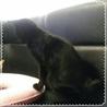 ポンポン尻尾の黒猫くん サムネイル4