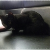 ポンポン尻尾の黒猫くん サムネイル5