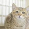 トライアル決定!キジトラの子猫の女の子 サムネイル3