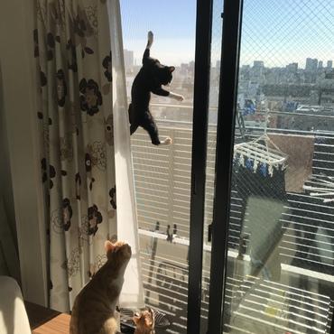 ボルダリングする猫