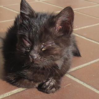 黒猫ちゃんを助けて下さい