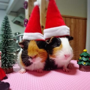 ちょこもかクリスマス