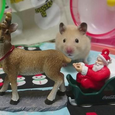 クリスマス早く来ないかな欣太2017-12-7
