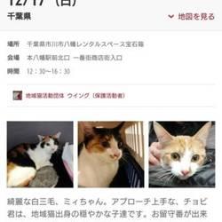 12/17本八幡駅前、猫譲渡会開催