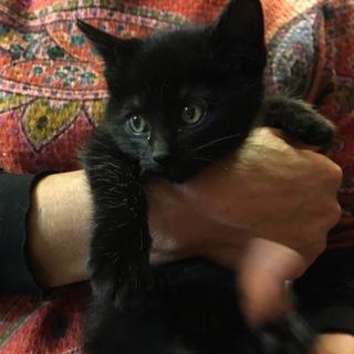 可愛い黒猫ジジ1ヶ月