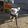 優しい性格のふわふわお嬢さん、子犬のゆらちゃん サムネイル2