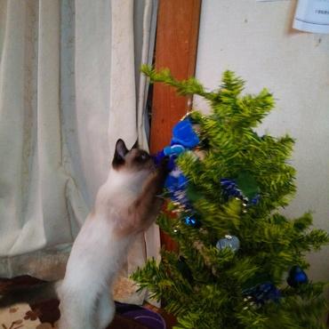 クリスマスツリーって美味しい❔