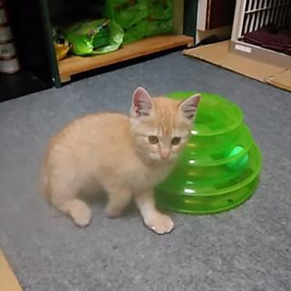 保護猫(3ヶ月位)もらってください❗