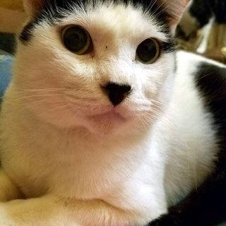 飼い主が亡くなり家も失った猫「福」