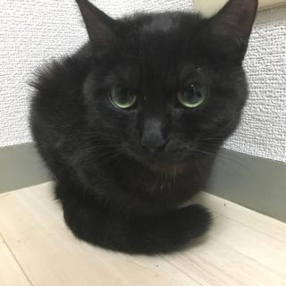 双子の黒猫