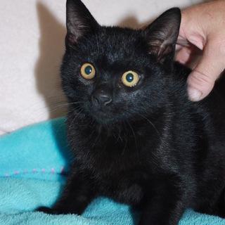 ケージから出してあげたい!人懐こい黒猫しずお君
