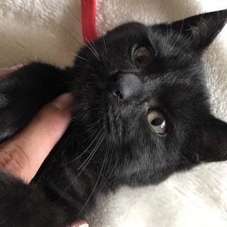 大至急 黒猫君の里親さん募集中